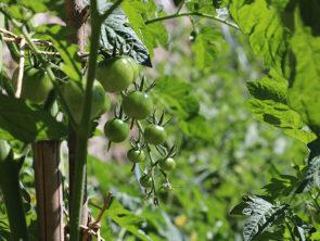 A la découverte de la permaculture